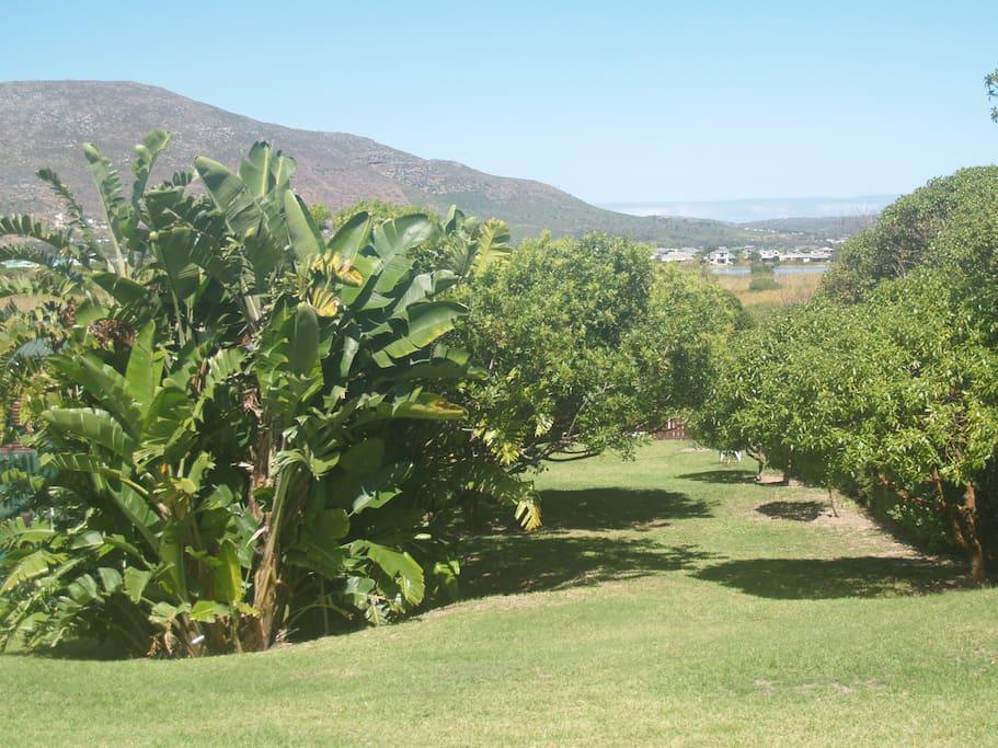 1 acre of pretty garden