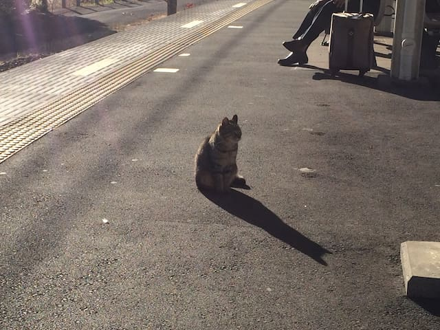 A cat on the plat form at Ajiro Station