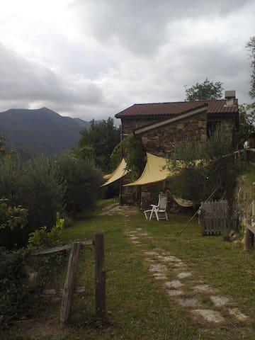 casa tra gli ulivi del 1800 liguria - Borzonasca