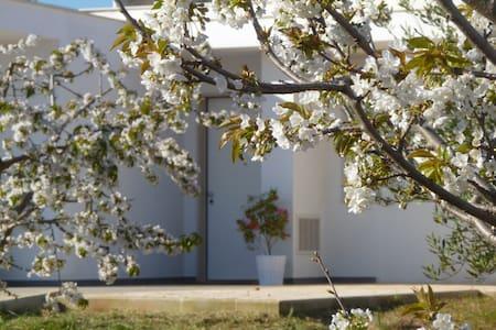 Il Giardino dei ciliegi: 2a Stanza  - Turi - Bed & Breakfast