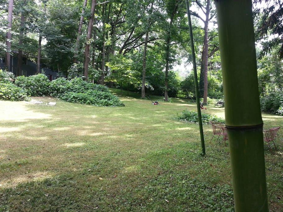 Backyard on the beautiful summer days