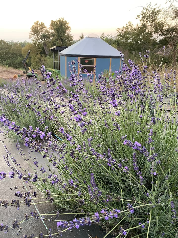 Glamping-Sky Dome Yurt-Tiny House-2 by Lavenders