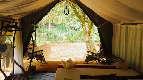 360 Rain Forest River Side Camping 4 -Sinharaja