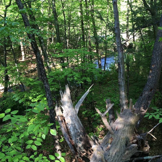Wooded area with river on property