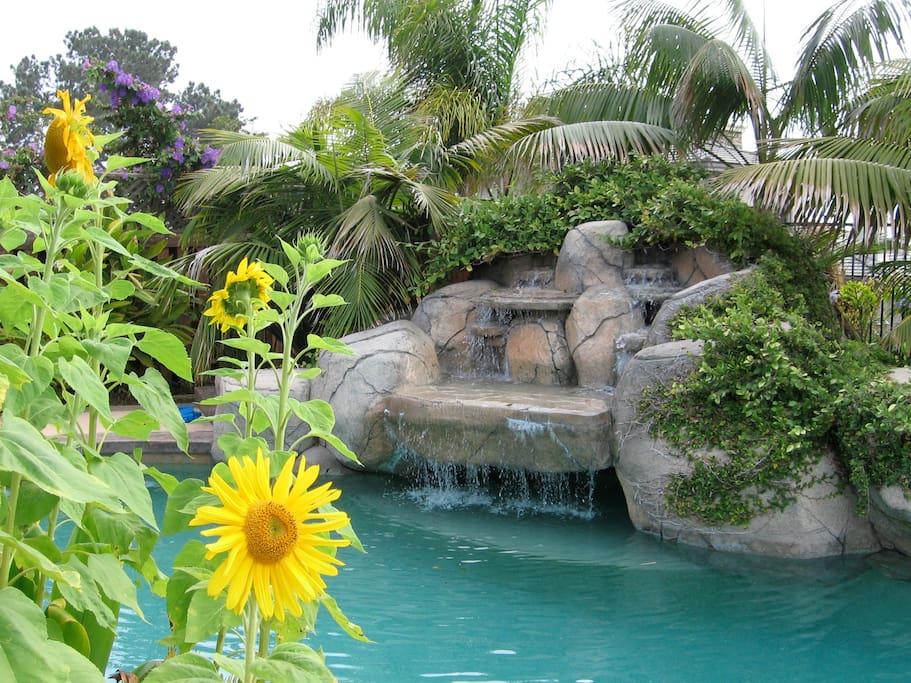 Swim up cave and lush tropical waterfall