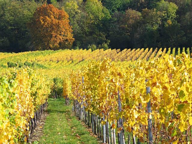 Appart 3p sur la route des vins, proximité Vosges - Mutzig - Apartamento