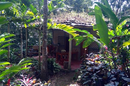 Quiet tropical forest cabins