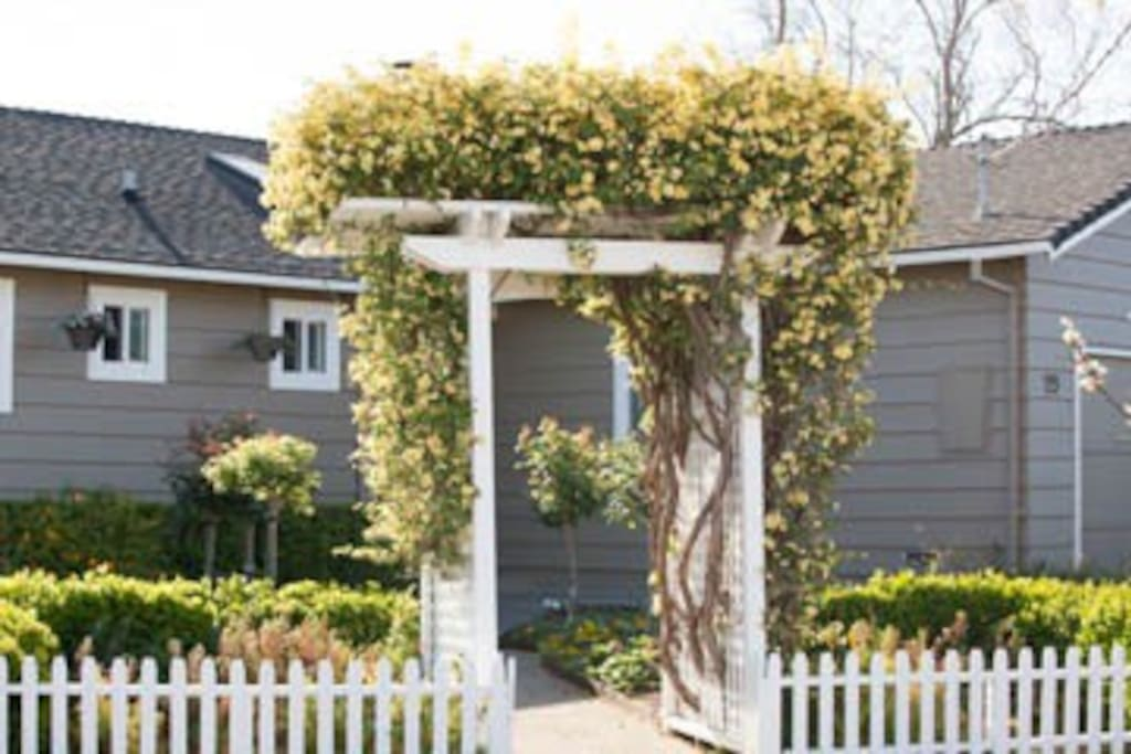 Our arbor is bursting with roses Spring/Summer