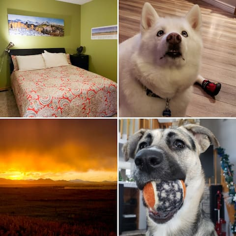 The bedroom, Tacoma in booties, sunset across the street, and Pickles with her ghost tennis ball.