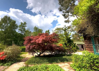 Vine Cottage in the New Forest - Sleeps up to 14 - Brockenhurst - House
