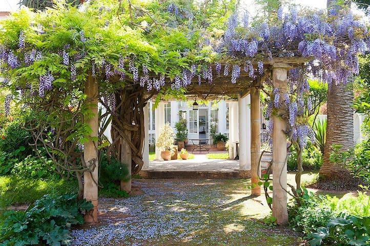 La maison vue du fond du jardin, la glycine est exubérante au début du printemps !