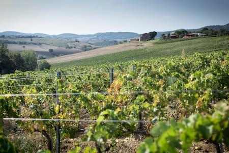 Winery near Montalcino Maremma Tuscany - Cinigiano - Bed & Breakfast