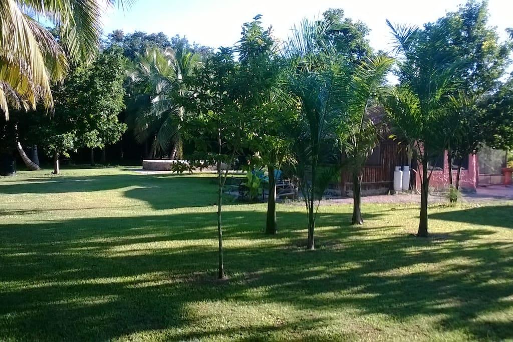 Yard view