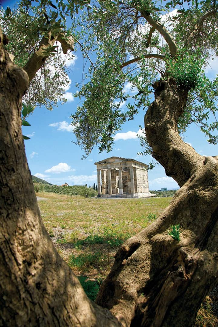 History & Olive Tree-Ancient Messene