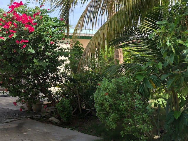 Central Apartment for a Tropical Wellness Retreat