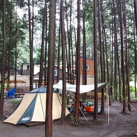 편백힐 치유의숲 캠핑장