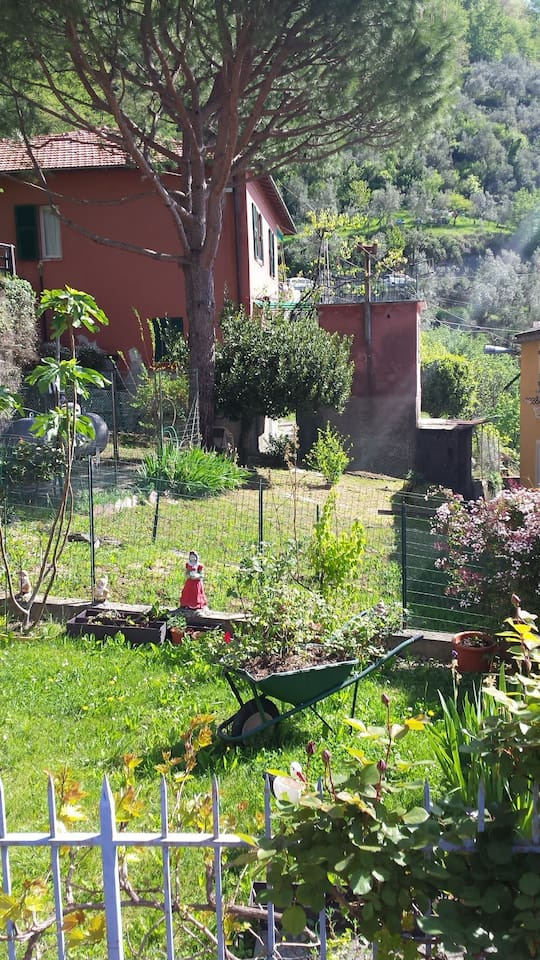 nearby garden