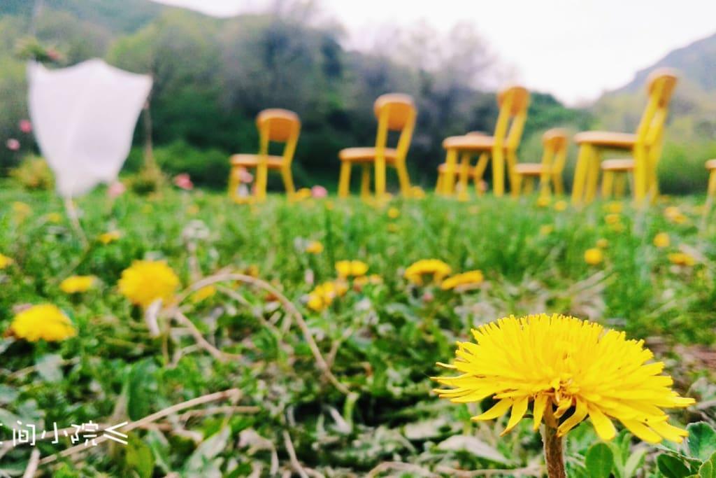 三间小院的草地,季节不同,开满不同的野花。