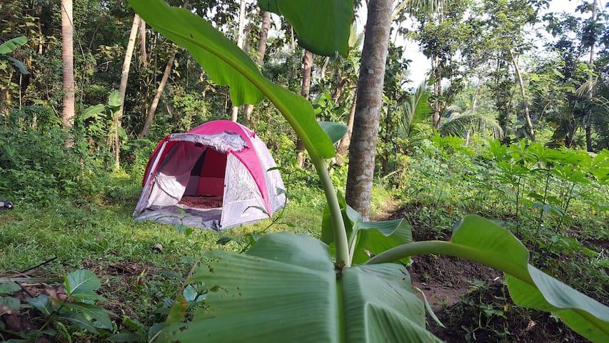 Jolan Jalan camping Borobudur (in organic garden) - Mungkid - เต็นท์