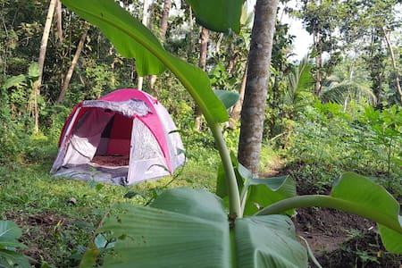 Jolan Jalan camping Borobudur (in organic garden) - Mungkid