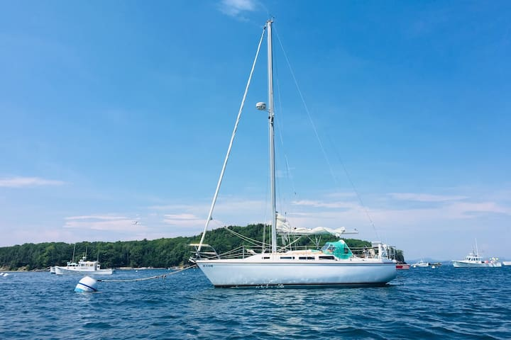 Hop aboard our Catalina 30' captained by Bar Harbor local, long term professional Mariner and  excellent sailor - Capt. Ben