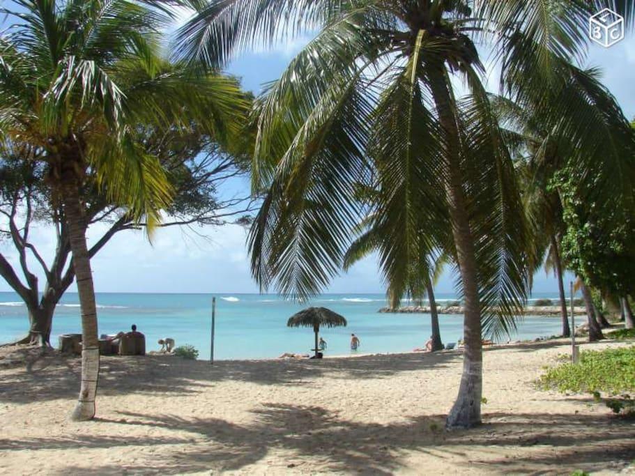 Notre plage paradisiaque de cocotiers et sable fin et blanc