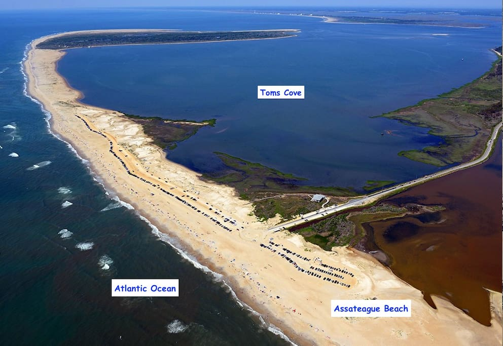 """No hotels at our beaches"". Good perspective of what  Assateague beach looks like. Perfect experience for a nice getaway versus strip full of noisy hotels."