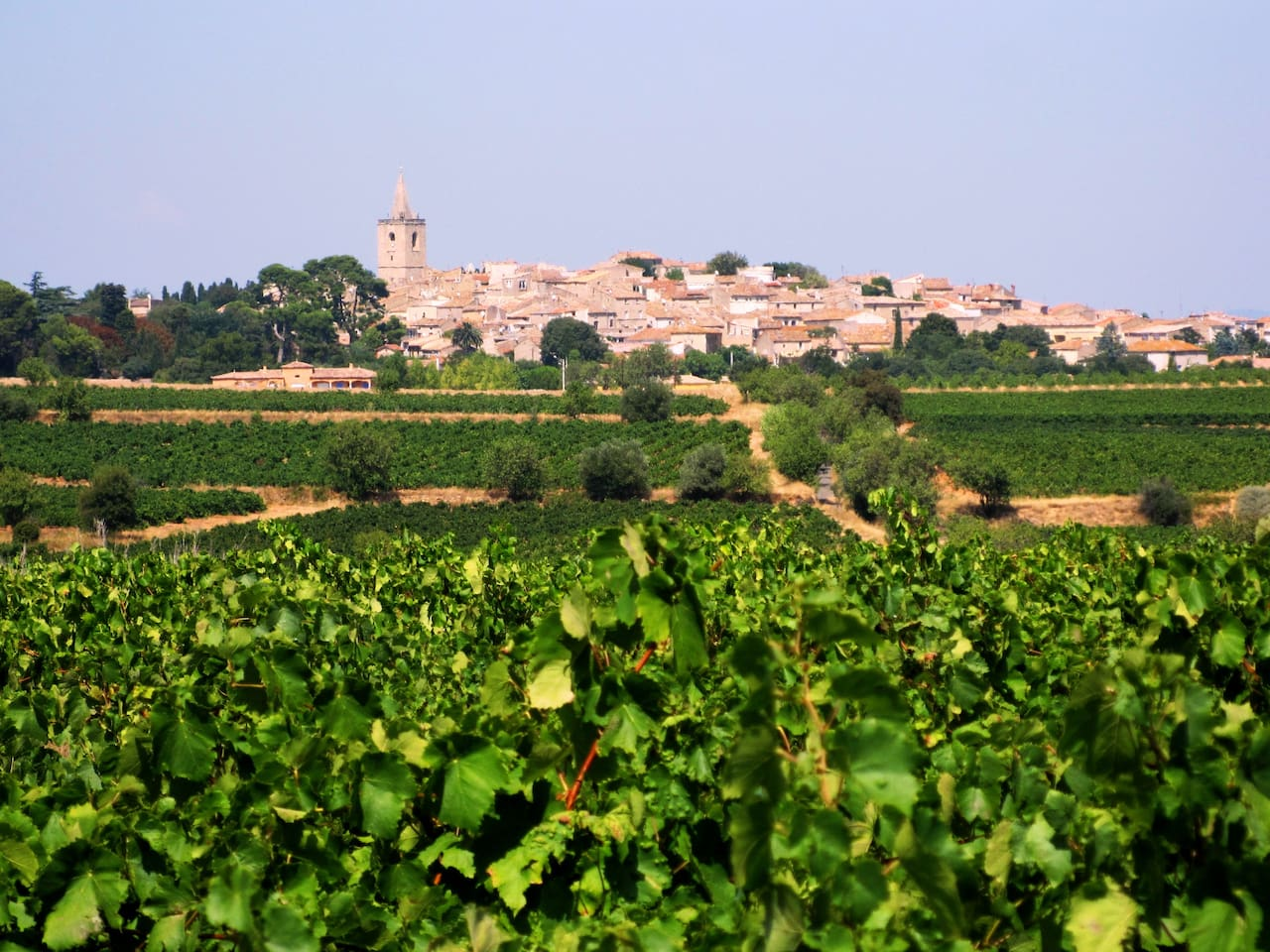View of Nézignan L'Evêque over the vineyards  of the Languedoc in the summer