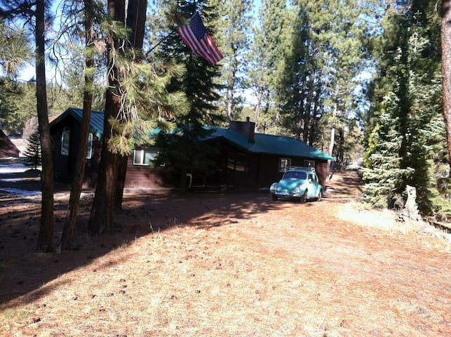 Cedar Cabin nestled in the Pines