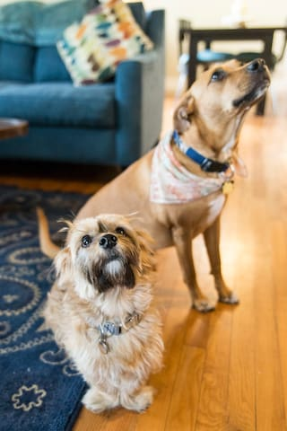 Our dogs: Edgar and Annabelle.  Annabelle is a rescue and is protective over Edgar when around other dogs so unfortunately we have to be firm on our no pets rule. This unfortunately includes service animals too as we don't want to risk any incidents.