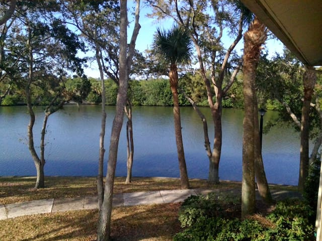 DOLPHINS FROM YOUR WINDOW - Tampa - Appartement