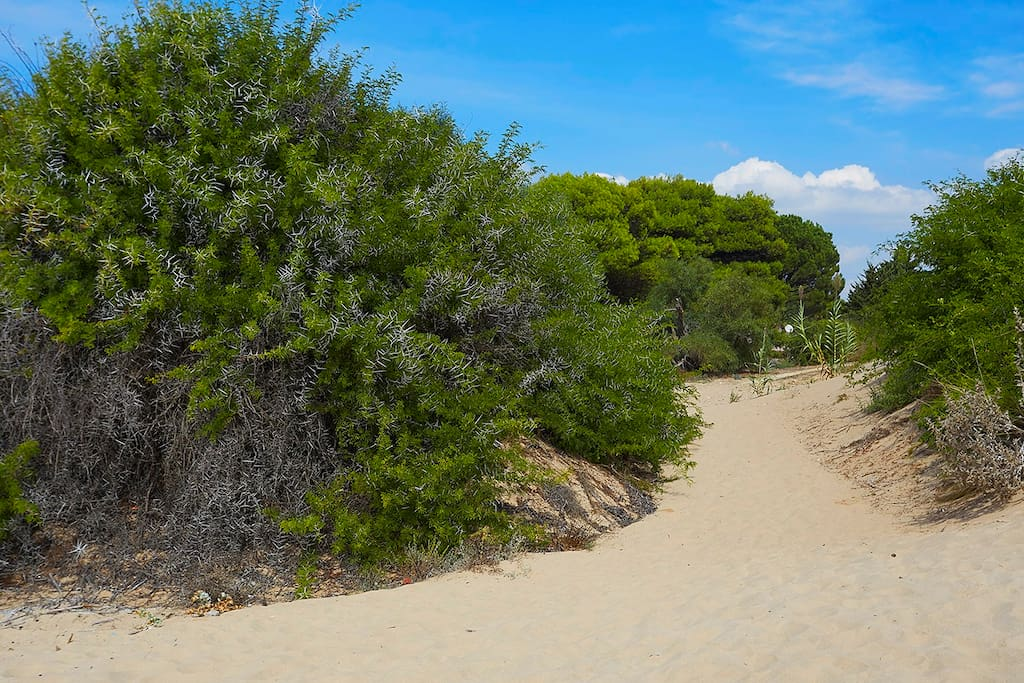 Path from the house to Lido Fiori beach
