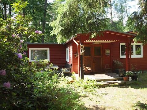 Dream Woodhouse