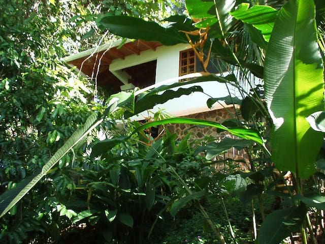 The Monkey House at Shelter From the Storm Villas - Dominical, Costa Rica  - Apartamento