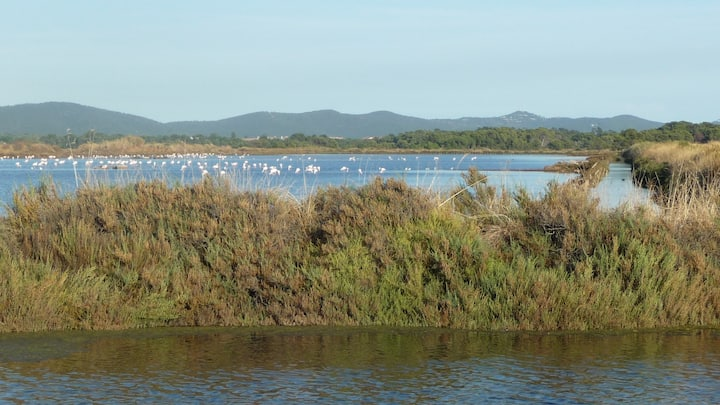 HYERES, view on nature area