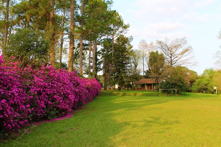 Colourful azaleas guide your way to the house