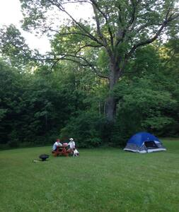 Lil Blue Tent under Big Ash Tree - Freeville - Tent