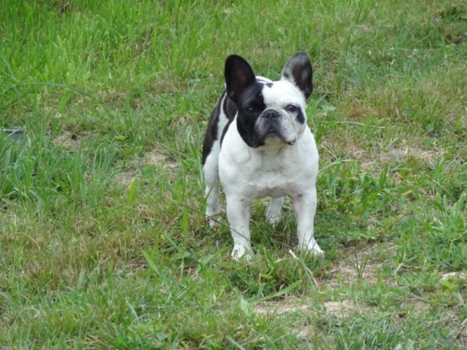 Hofhund Mathilde