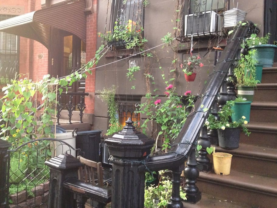 Stoop and flowers