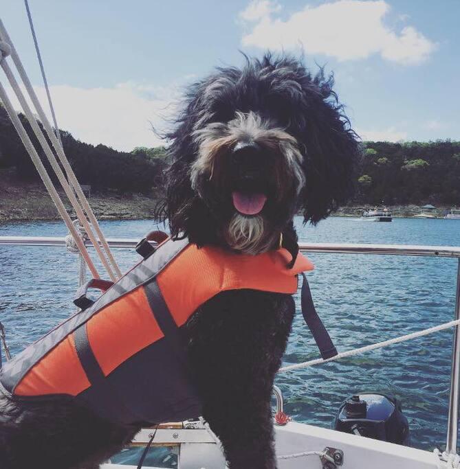 Leonard the Sailing Sheepdog #leonarddoodle