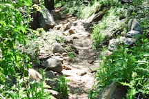 Trail through woods to the top of Bishop's Peak.