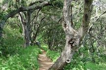 Wooded walking path up to Bishop's Peak