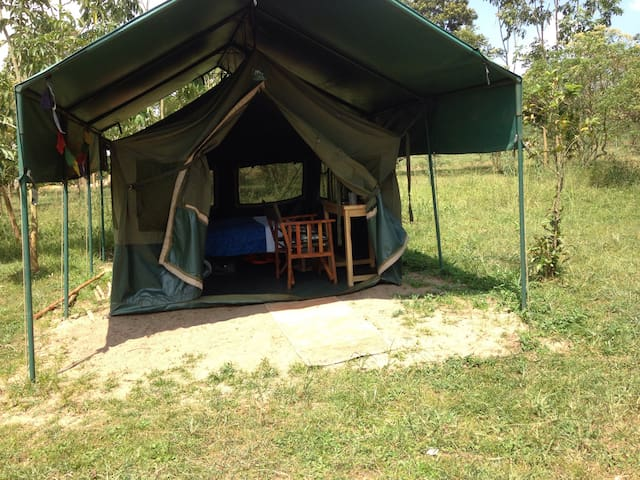 Safari tent on the Nile riverbank - Jinja - Tenda