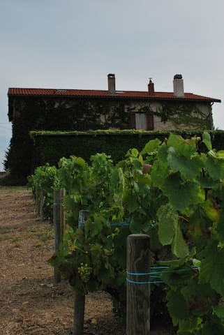 La maison côté vignoble