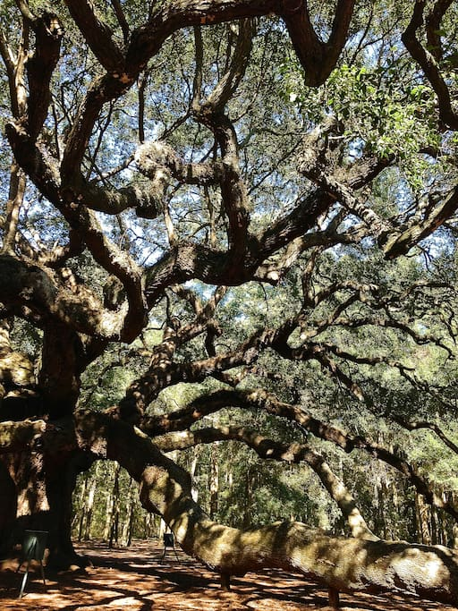 If you love the massive oak trees in my back yard, I'm just moments away from the majestic Angel Oak, Charleston Tea Plantation, and many other exclusive, natural wonders.