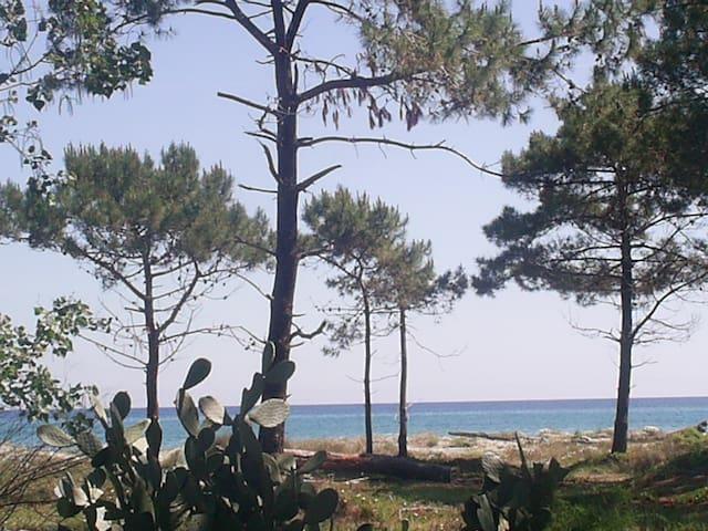 """vacances """" les pieds dans l'eau """" - borgo - Appartement"""