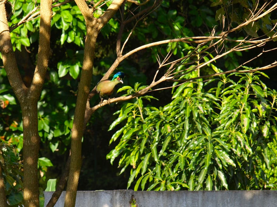 If you enjoy birds then you will love this garden, we are often visited by purple crested louries, Heuglins robins etc.