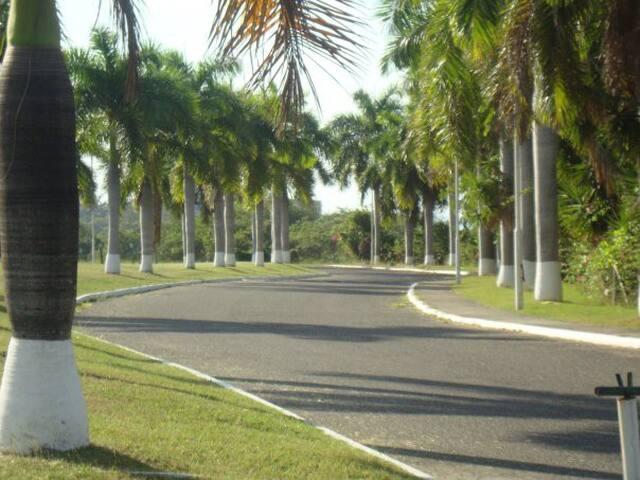 drive way to gate