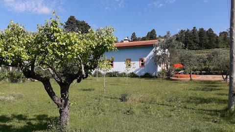 Casa Merlot, på en äkta vinodling med pool