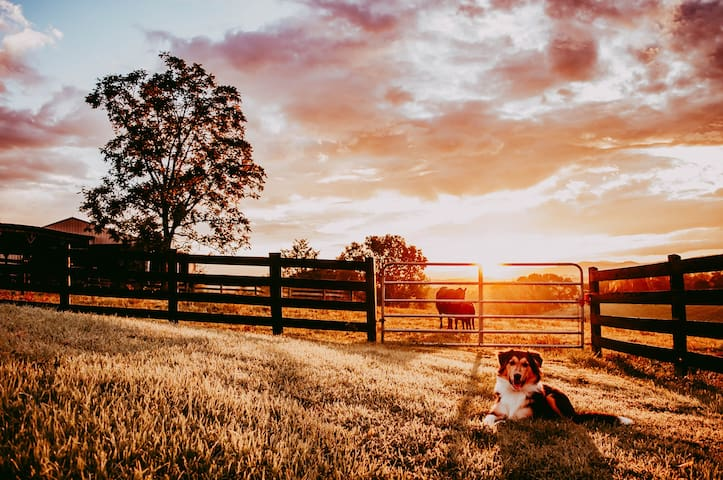 Teddy posing for the camera during one of our beautiful sunrises on the farm.